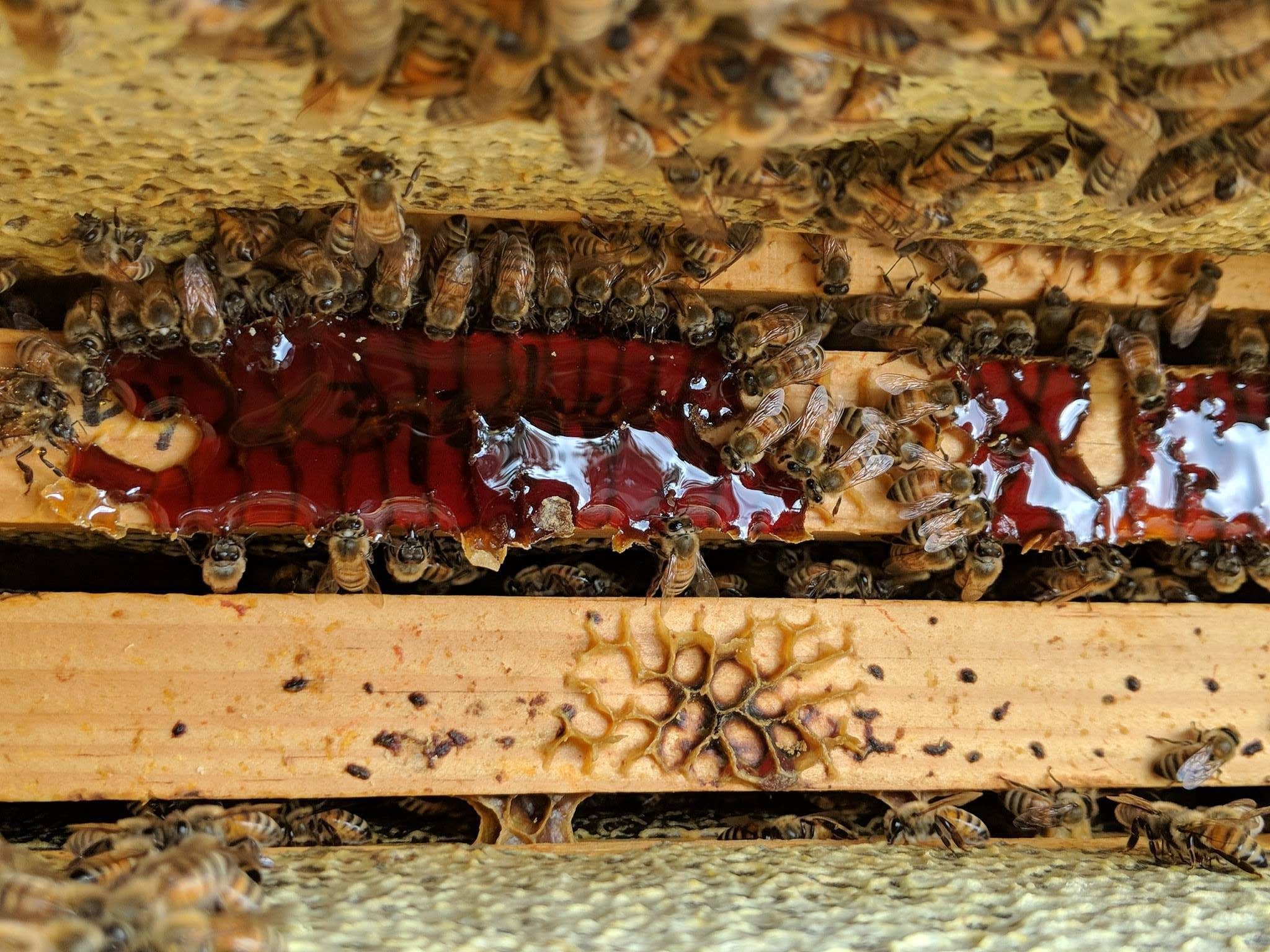 Akron Honey Bees